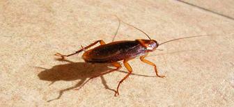 Как потравить тараканов в квартире